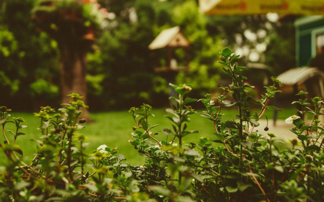 Wat is het verschil tussen tuinafval en groenafval