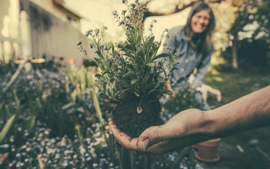 10 tips om je tuin winterklaar te maken