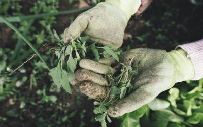 Maak je tuin lenteklaar in 8 stappen